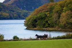 Horse and Cart Ride inside Killarney National Park