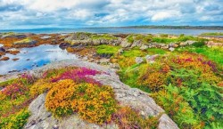 The Burren In Bloom.